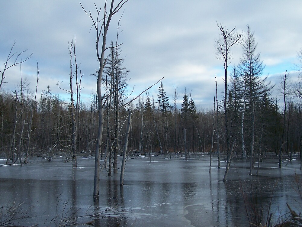 Freezing Swamp by Gene Cyr