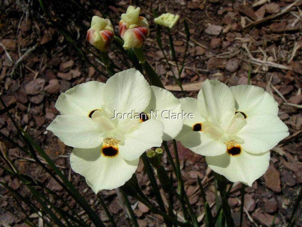 Flowers by Jordan N Clarke