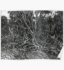 The Mangroves Poster