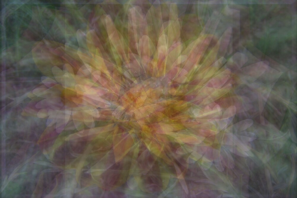 Daisy Abstract by Kay  G Larsen