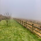 One foggy morning in Yorkshire by Sharon Kavanagh