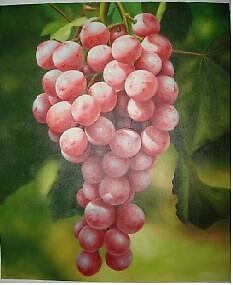 Grape by hengyixuan