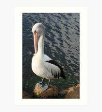 Pelican Preen Art Print