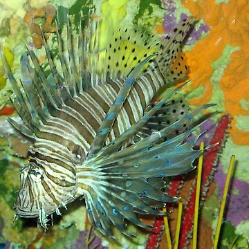 Lionfish by HMorris
