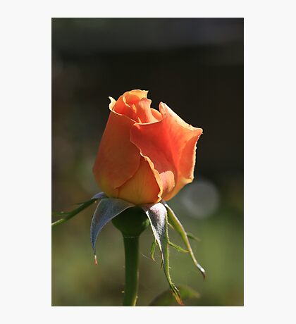 A Rose For Mum Photographic Print