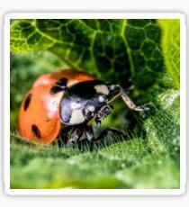 Ladybird (Coccinellidae) Sticker