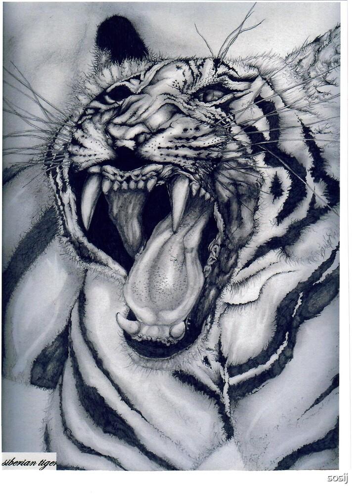 Siberian Tiger/Dusk by sosij