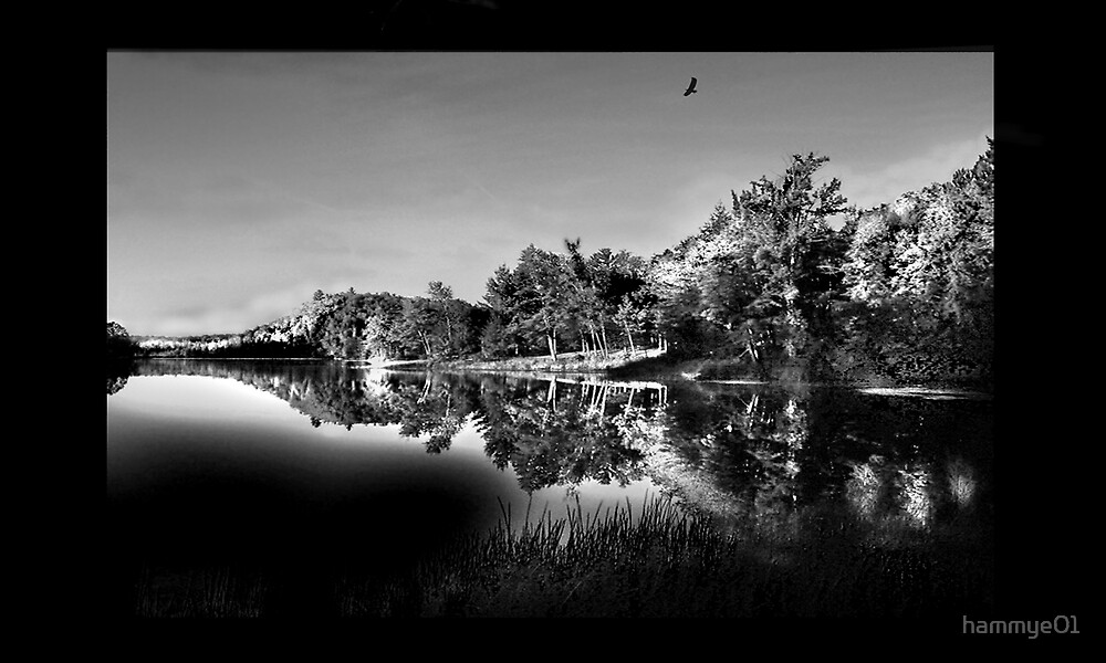 Reflections in Black and White by hammye01