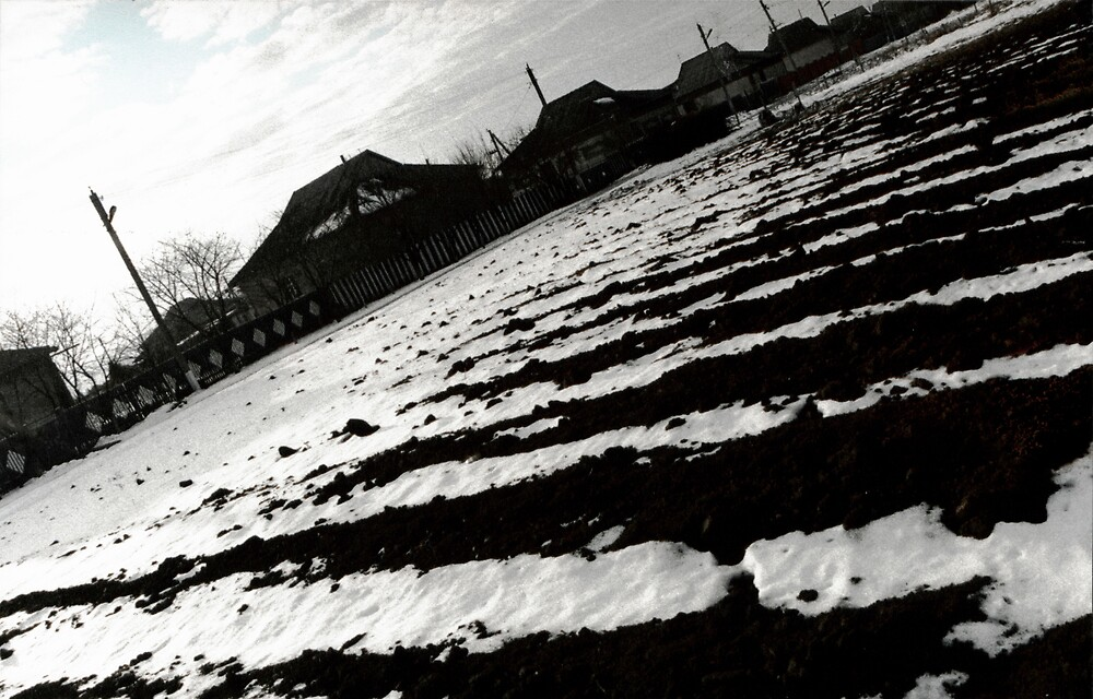 Snow & Soil by Ion Rosca