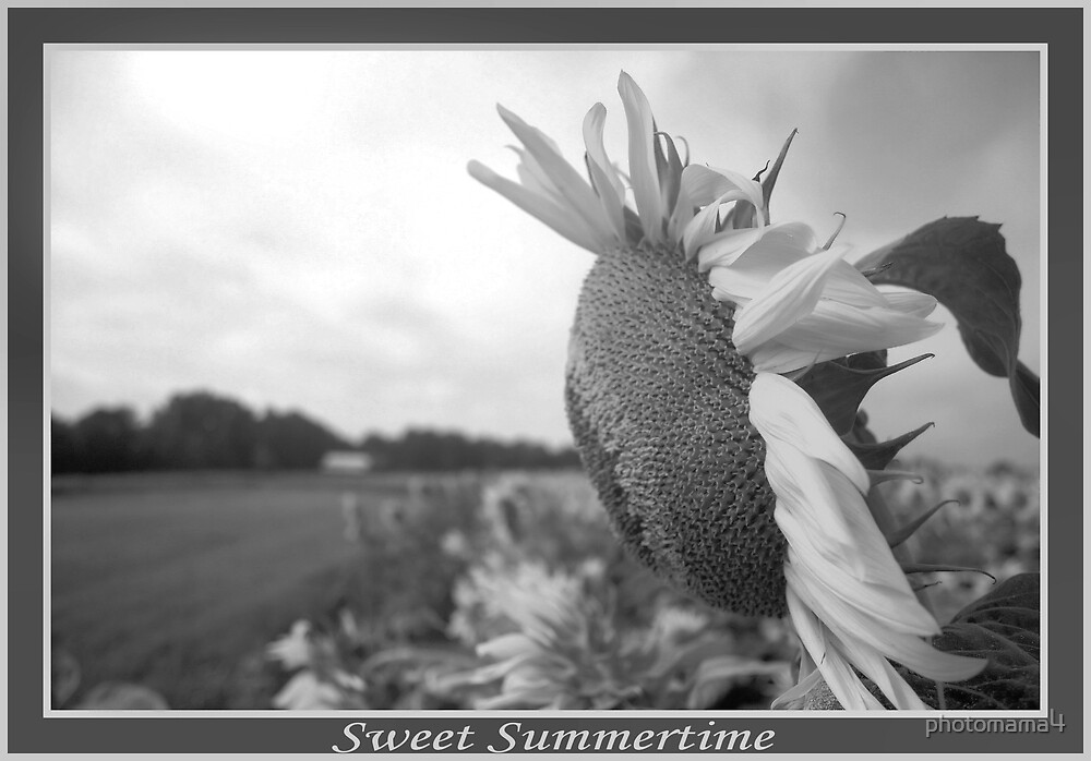 Sweet Summertime by photomama4