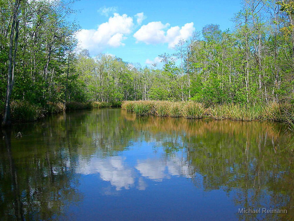 Bayou Reflections by Michael Reimann