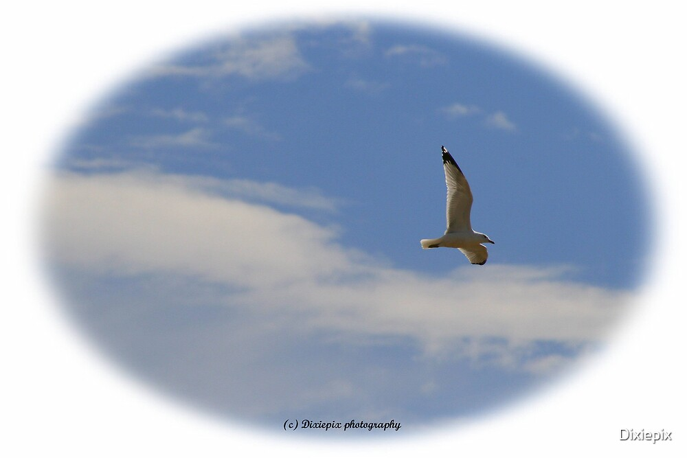 Seagull by Dixiepix