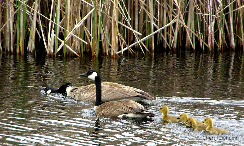 family outing 2 by Cheryl Dunning