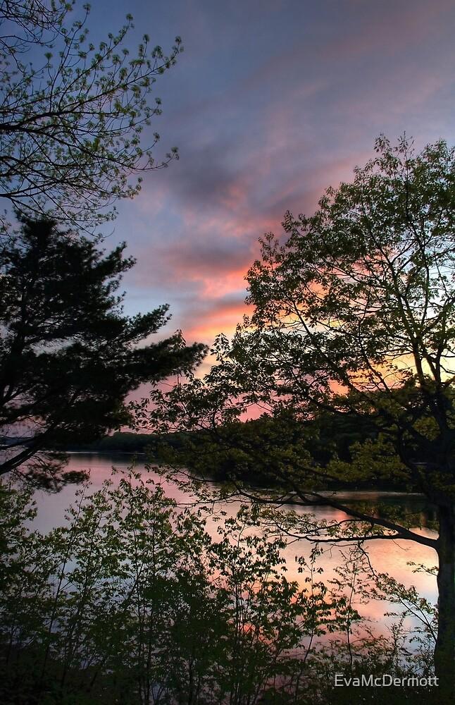 Trees at Sunset by EvaMcDermott