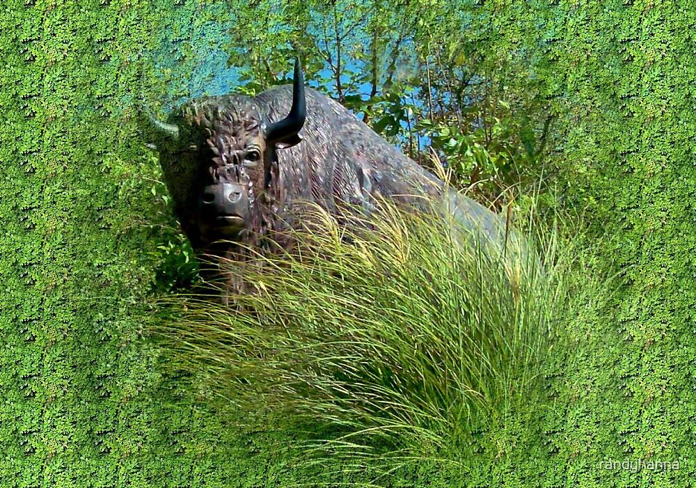 Bison by randyhanna