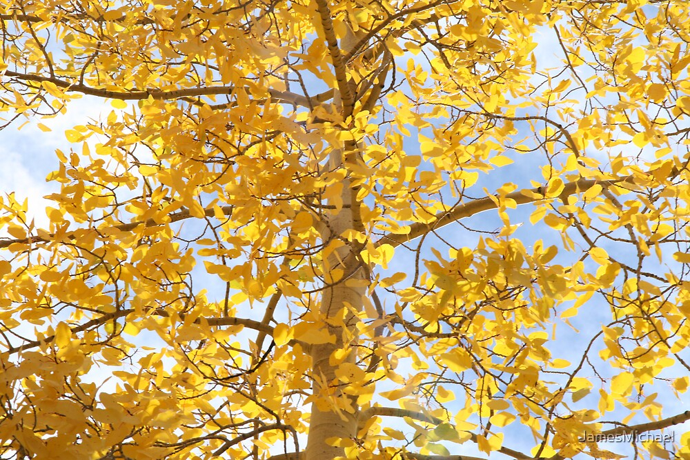 Golden Aspen Leaves by JamesMichael