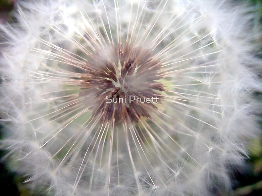 Make a Wish by Suni Pruett