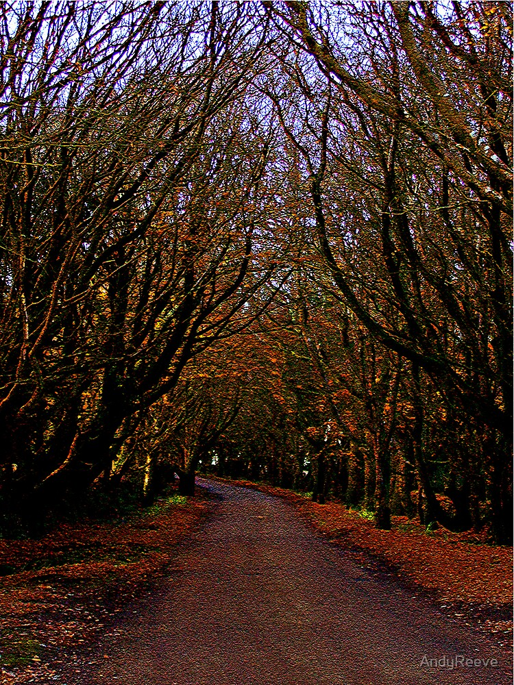 Dark Lane made Colourful by AndyReeve