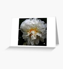white camellia_3 Greeting Card