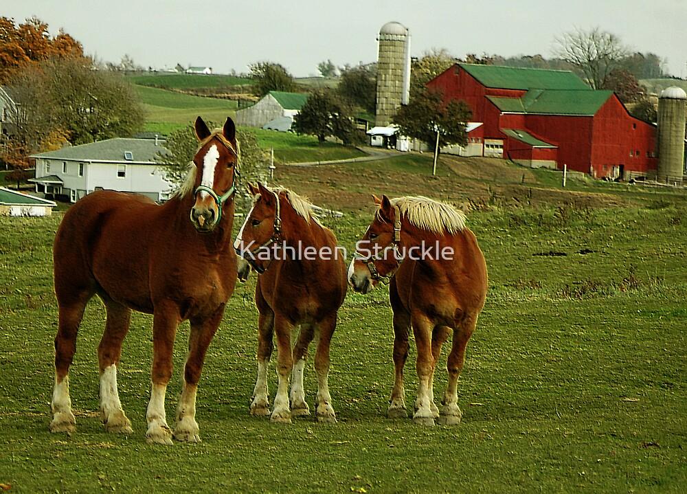Horses On Farm 2 by Kathleen Struckle