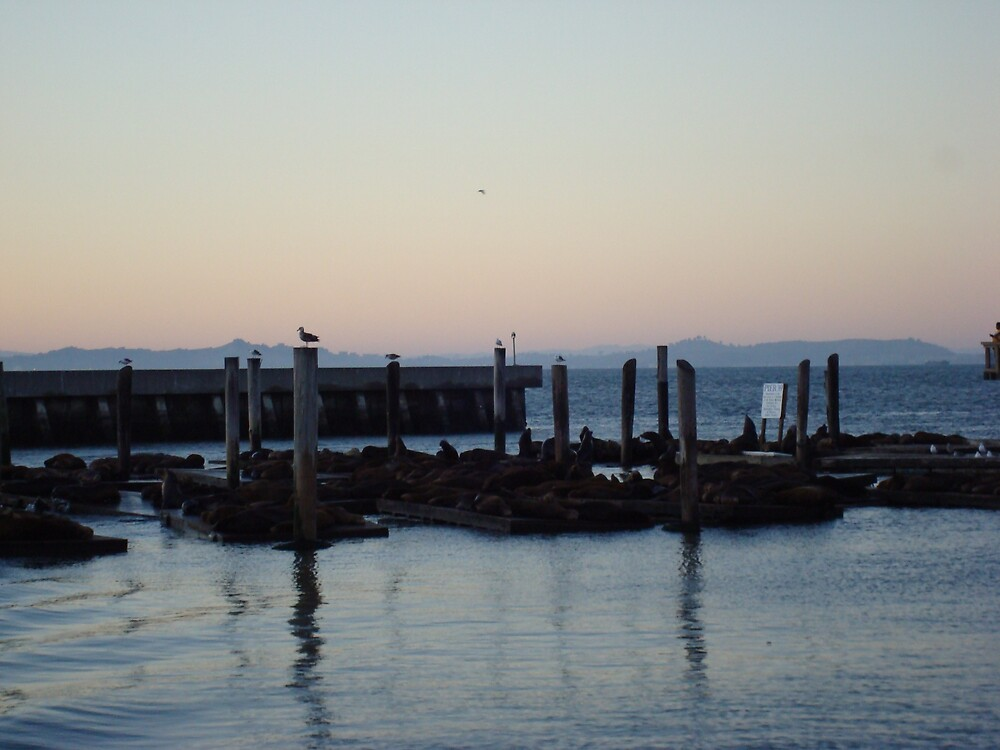Fishermans Wharf (Seals) SF by Ezza