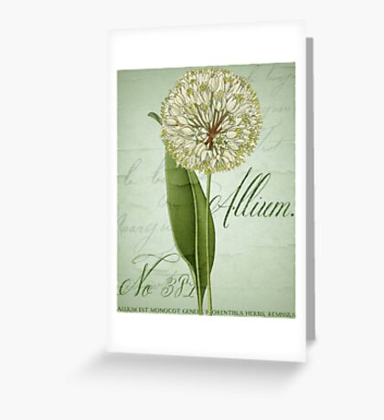 Allium II Greeting Card
