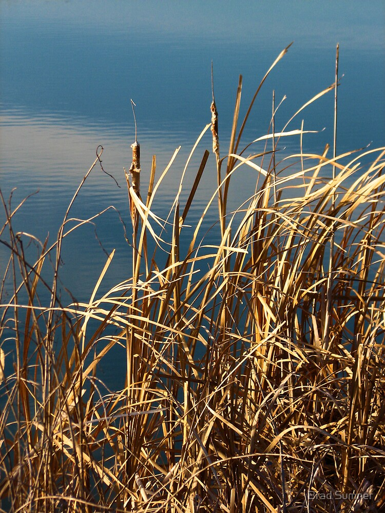 Fall on the Pond by Brad Sumner