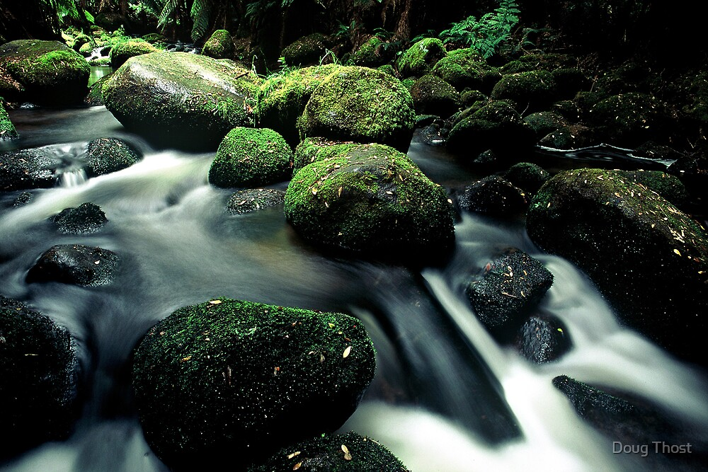 Tasmanian Stream by Doug Thost