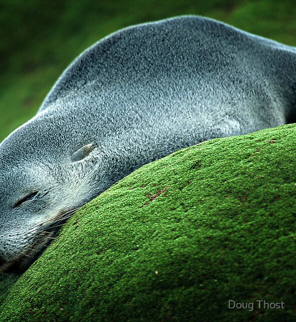 Flat Out by Doug Thost