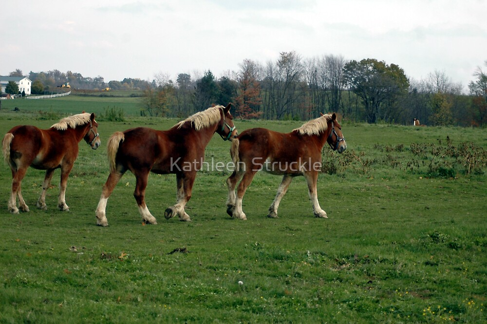 Follow The Leader by Kathleen Struckle