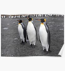 "King Penguins ~ ""On Parade"" Poster"