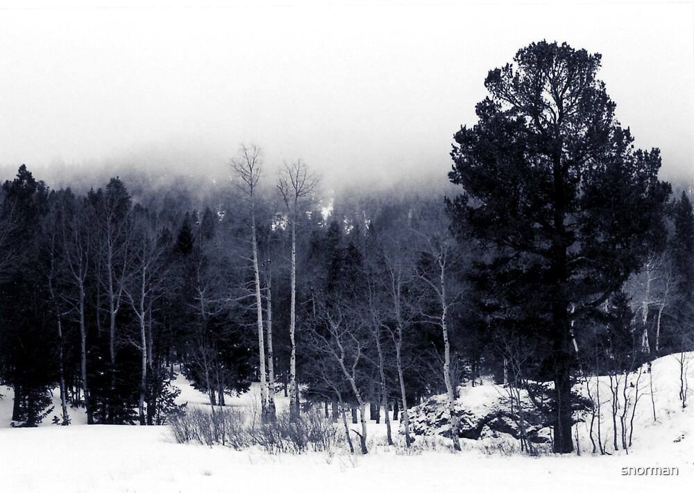 Snow in the Pines by snorman