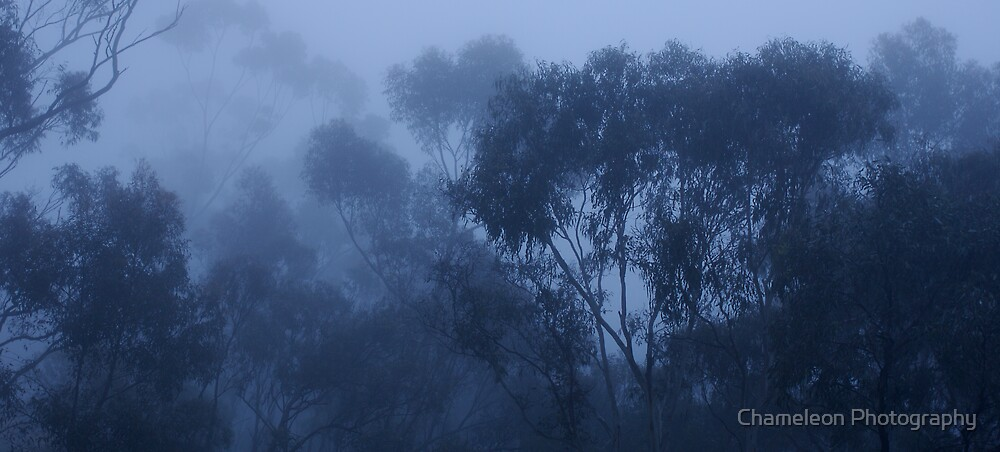 Ghost Gums by Chameleon Photography