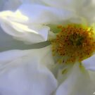 White ! by Elfriede Fulda