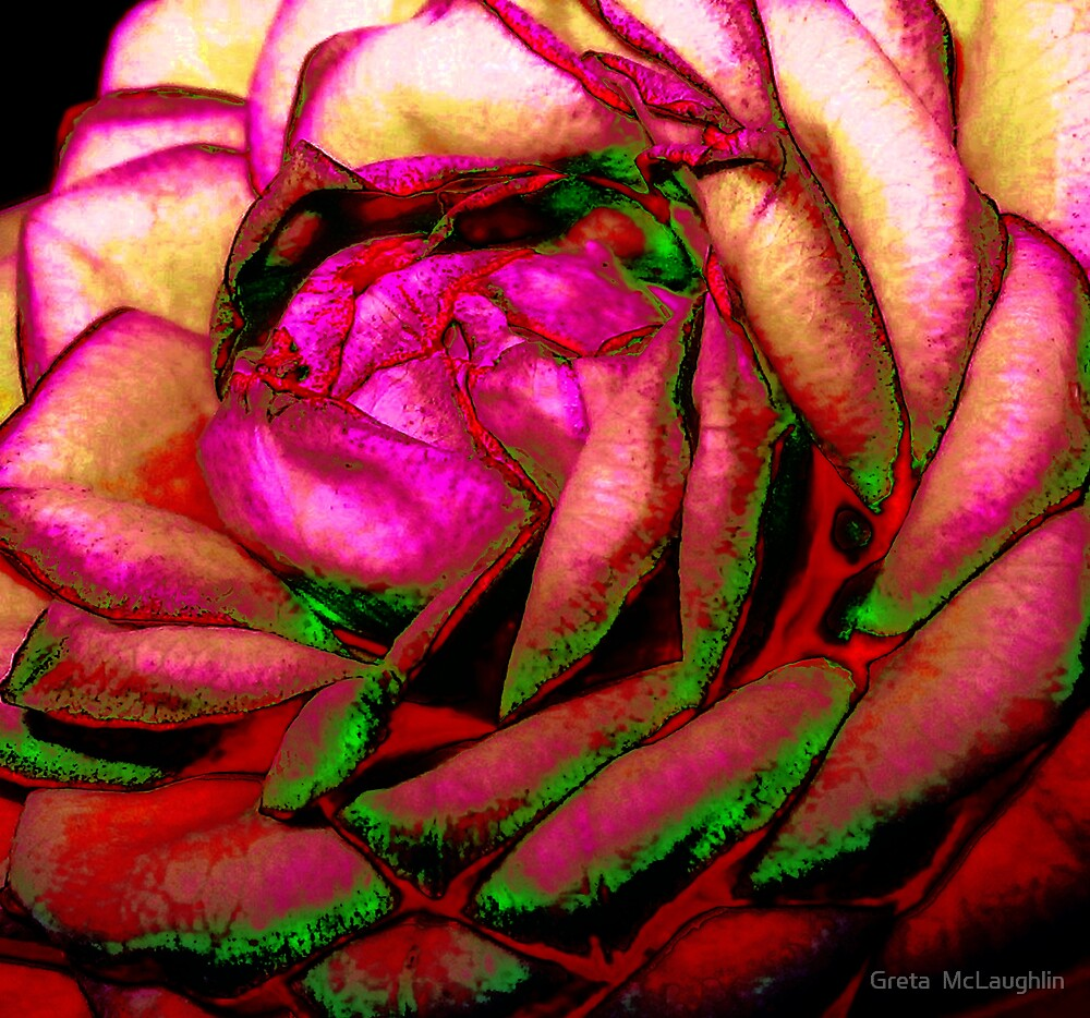 A Rose is A Rose is A Rose by Greta  McLaughlin