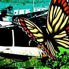 Cape Town Butterfly World by SofiaYoushi