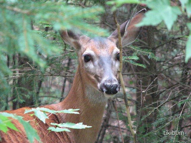 Deer Mother by tikibum
