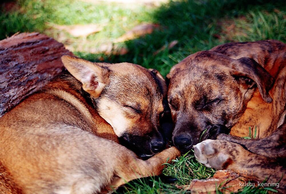 let sleepimg dogs lie by kristy  kenning