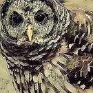 """""""The owls are not what they seem"""" by © Kira Bodensted"""