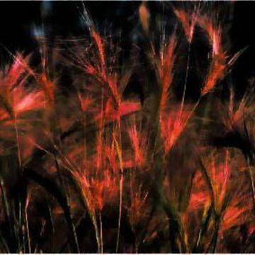 Fields of Barley by kjhart8