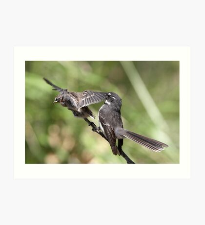 Grey Fantail and chick ~ Pre-flight Check   Art Print