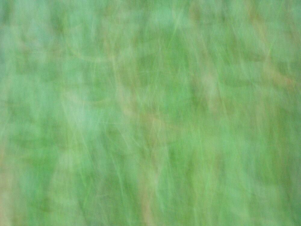 forestgreen by joelkim