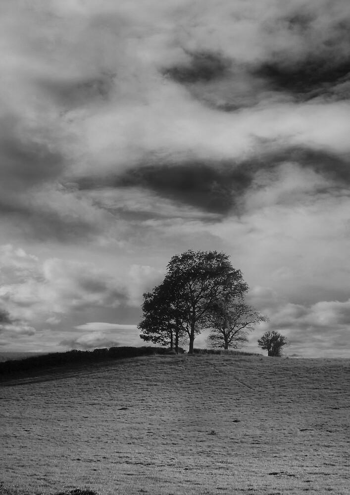 Solitude by Moth