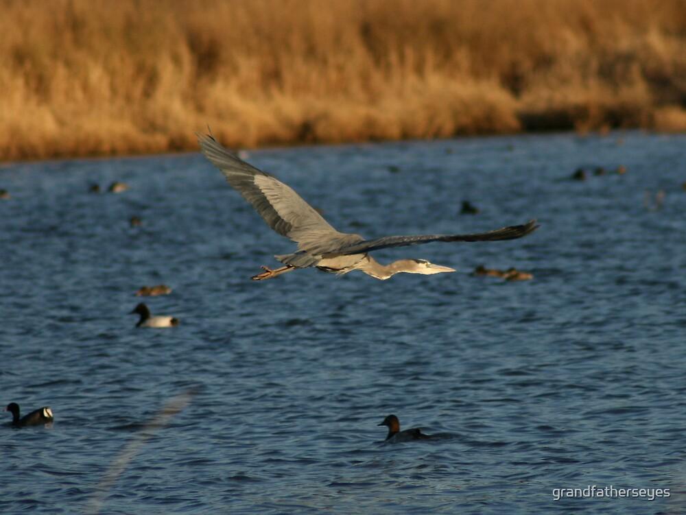Crane in flight by grandfatherseyes