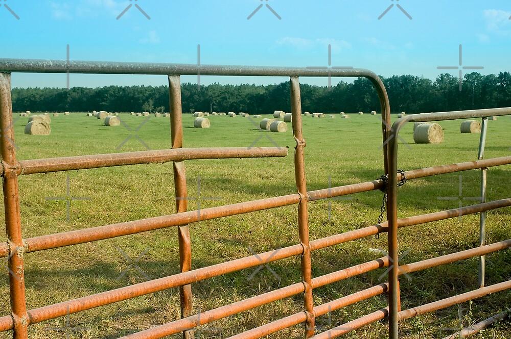 Hay rolls through the gate by Stacey Lynn Payne