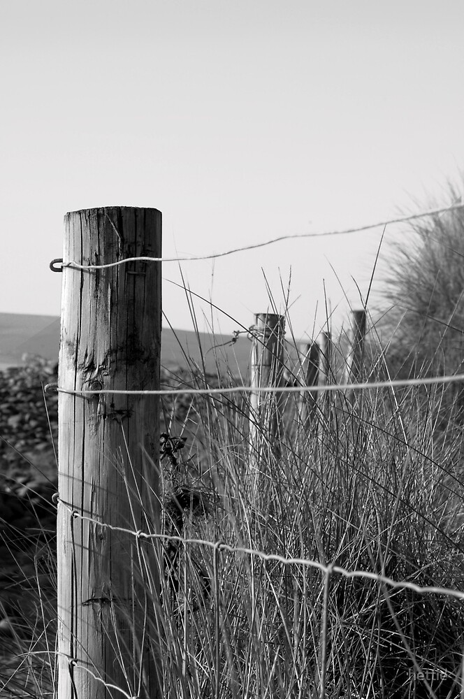 Fence post by hettie