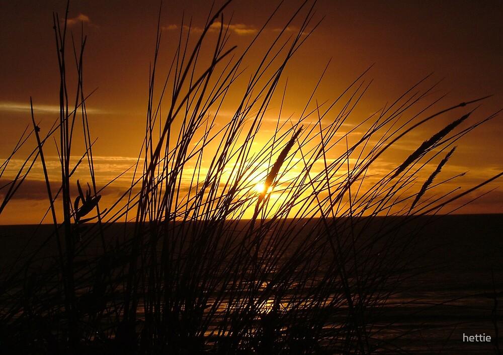 Reeds in the sun by hettie