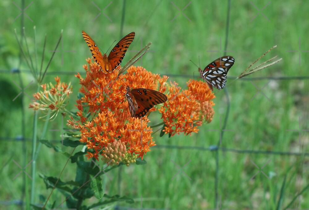 Butterfly Weed by Stacey Lynn Payne