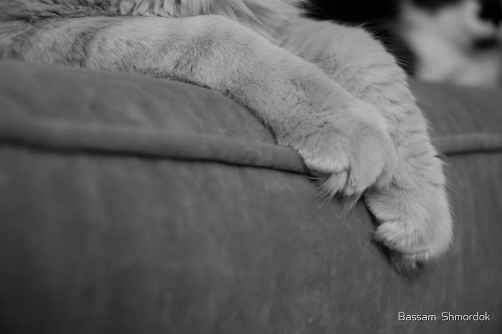 Resting by Bassam  Shmordok
