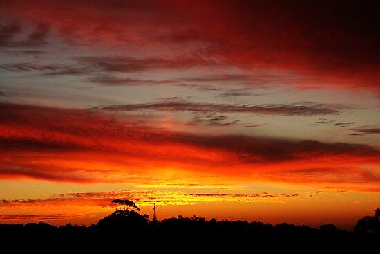 Belair Sunset by Stephen Mitchell